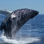 3 Incredible Lessons Whales Can Teach Writers